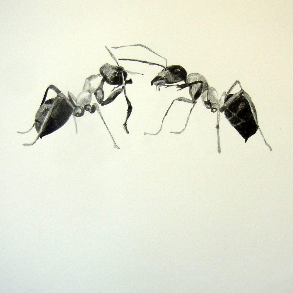 Krabbeln ist subjektiv, 30 x 30 cm, Bleistift auf Papier